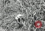 Image of farmers learn about REA Saint Clairsville Ohio USA, 1940, second 19 stock footage video 65675030606