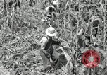 Image of farmers learn about REA Saint Clairsville Ohio USA, 1940, second 21 stock footage video 65675030606