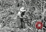 Image of farmers learn about REA Saint Clairsville Ohio USA, 1940, second 23 stock footage video 65675030606