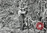 Image of farmers learn about REA Saint Clairsville Ohio USA, 1940, second 24 stock footage video 65675030606