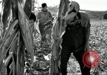 Image of farmers learn about REA Saint Clairsville Ohio USA, 1940, second 32 stock footage video 65675030606