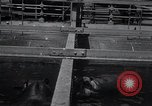Image of hippopotamus New York United States USA, 1931, second 12 stock footage video 65675030768