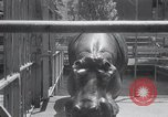 Image of hippopotamus New York United States USA, 1931, second 19 stock footage video 65675030768