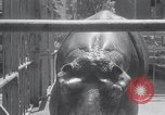 Image of hippopotamus New York United States USA, 1931, second 22 stock footage video 65675030768