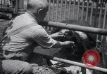 Image of hippopotamus New York United States USA, 1931, second 25 stock footage video 65675030768