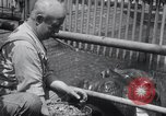 Image of hippopotamus New York United States USA, 1931, second 26 stock footage video 65675030768