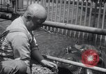 Image of hippopotamus New York United States USA, 1931, second 27 stock footage video 65675030768