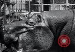 Image of hippopotamus New York United States USA, 1931, second 34 stock footage video 65675030768