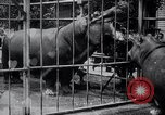Image of hippopotamus New York United States USA, 1931, second 36 stock footage video 65675030768