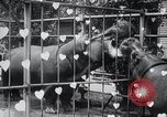 Image of hippopotamus New York United States USA, 1931, second 40 stock footage video 65675030768