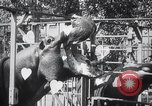 Image of hippopotamus New York United States USA, 1931, second 42 stock footage video 65675030768