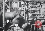 Image of hippopotamus New York United States USA, 1931, second 43 stock footage video 65675030768
