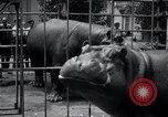 Image of hippopotamus New York United States USA, 1931, second 45 stock footage video 65675030768