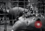 Image of hippopotamus New York United States USA, 1931, second 47 stock footage video 65675030768
