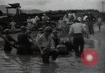 Image of 24th infantry division South Korea, 1950, second 10 stock footage video 65675030821