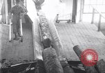 Image of Lumbering United States USA, 1929, second 29 stock footage video 65675030993