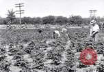 Image of Ford gardens Michigan United States USA, 1932, second 2 stock footage video 65675030998