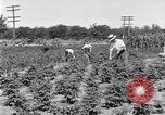 Image of Ford gardens Michigan United States USA, 1932, second 4 stock footage video 65675030998