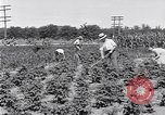 Image of Ford gardens Michigan United States USA, 1932, second 5 stock footage video 65675030998