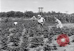 Image of Ford gardens Michigan United States USA, 1932, second 8 stock footage video 65675030998