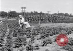 Image of Ford gardens Michigan United States USA, 1932, second 11 stock footage video 65675030998
