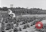 Image of Ford gardens Michigan United States USA, 1932, second 12 stock footage video 65675030998