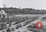 Image of Ford gardens Michigan United States USA, 1932, second 14 stock footage video 65675030998