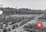 Image of Ford gardens Michigan United States USA, 1932, second 15 stock footage video 65675030998
