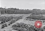 Image of Ford gardens Michigan United States USA, 1932, second 18 stock footage video 65675030998
