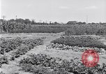Image of Ford gardens Michigan United States USA, 1932, second 19 stock footage video 65675030998
