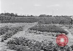 Image of Ford gardens Michigan United States USA, 1932, second 20 stock footage video 65675030998