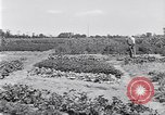 Image of Ford gardens Michigan United States USA, 1932, second 22 stock footage video 65675030998