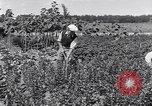 Image of Ford gardens Michigan United States USA, 1932, second 27 stock footage video 65675030998