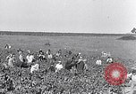 Image of grape harvest France, 1931, second 3 stock footage video 65675031149
