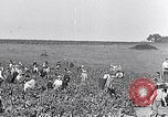Image of grape harvest France, 1931, second 4 stock footage video 65675031149
