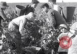 Image of grape harvest France, 1931, second 9 stock footage video 65675031149