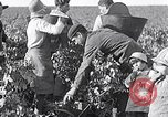 Image of grape harvest France, 1931, second 10 stock footage video 65675031149