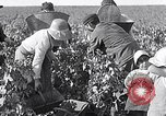 Image of grape harvest France, 1931, second 13 stock footage video 65675031149