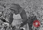 Image of grape harvest France, 1931, second 16 stock footage video 65675031149