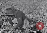Image of grape harvest France, 1931, second 17 stock footage video 65675031149