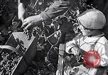 Image of grape harvest France, 1931, second 21 stock footage video 65675031149