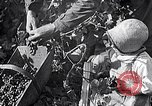 Image of grape harvest France, 1931, second 22 stock footage video 65675031149