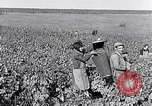 Image of grape harvest France, 1931, second 26 stock footage video 65675031149