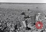 Image of grape harvest France, 1931, second 27 stock footage video 65675031149