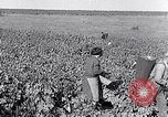 Image of grape harvest France, 1931, second 28 stock footage video 65675031149
