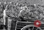 Image of grape harvest France, 1931, second 30 stock footage video 65675031149