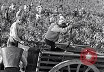 Image of grape harvest France, 1931, second 32 stock footage video 65675031149