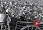 Image of grape harvest France, 1931, second 33 stock footage video 65675031149