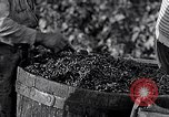 Image of grape harvest France, 1931, second 38 stock footage video 65675031149