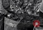 Image of grape harvest France, 1931, second 39 stock footage video 65675031149